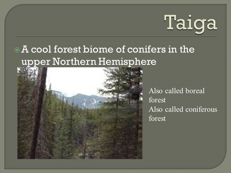 Taiga A cool forest biome of conifers in the upper Northern Hemisphere