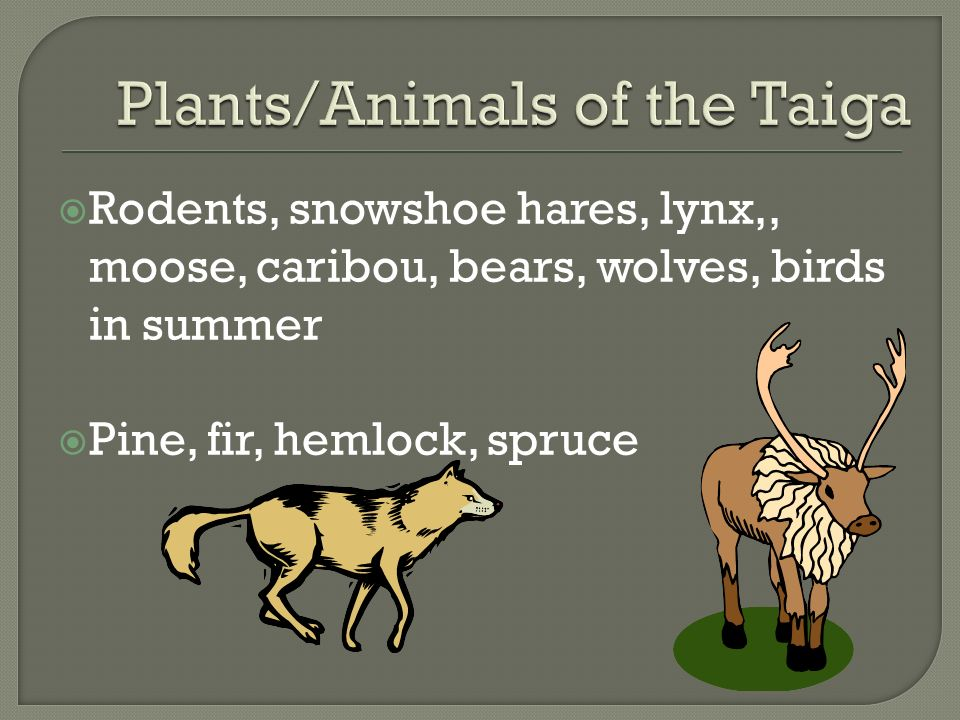 Plants/Animals of the Taiga