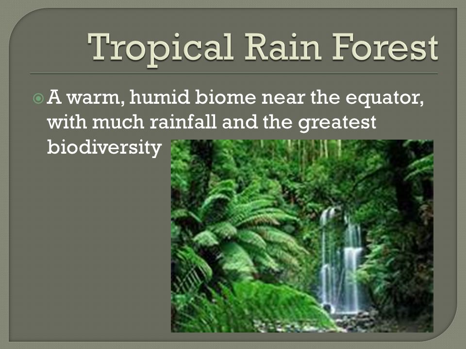 Tropical Rain Forest A warm, humid biome near the equator, with much rainfall and the greatest biodiversity.