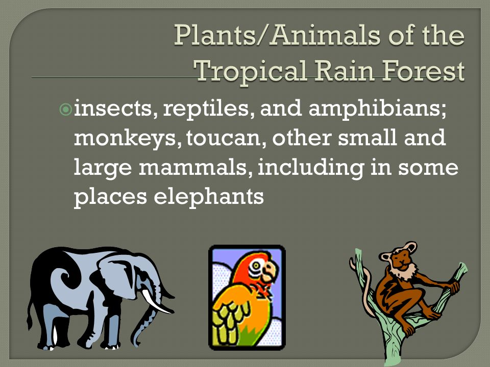 Plants/Animals of the Tropical Rain Forest