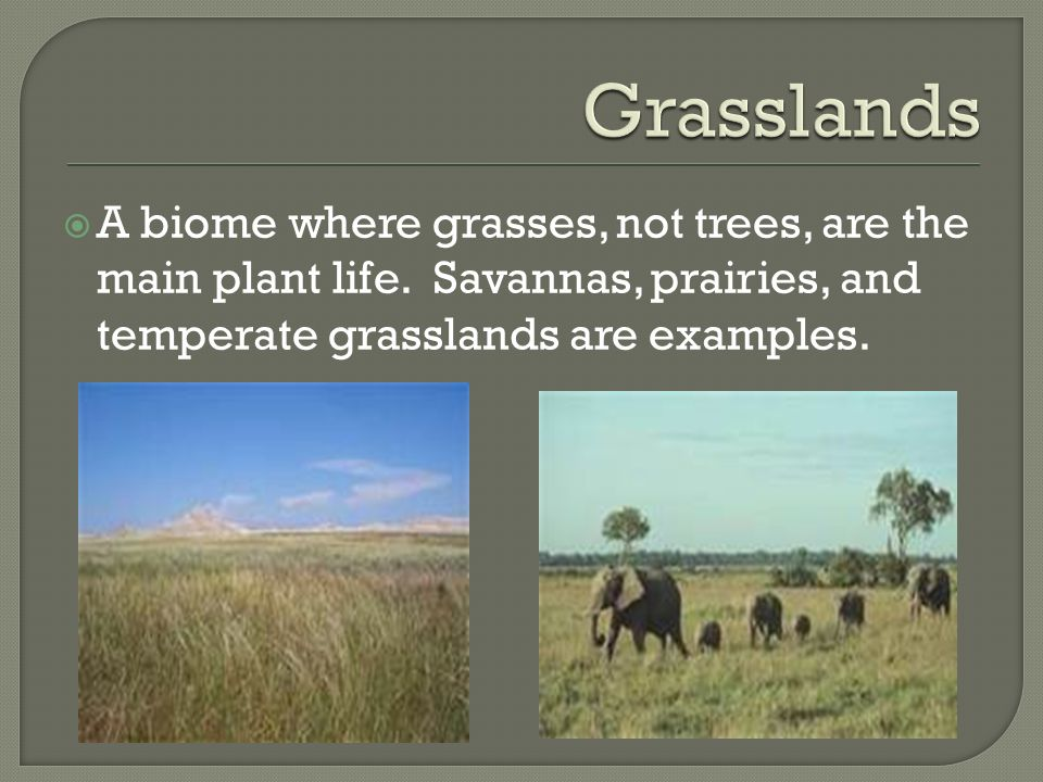 Grasslands A biome where grasses, not trees, are the main plant life.