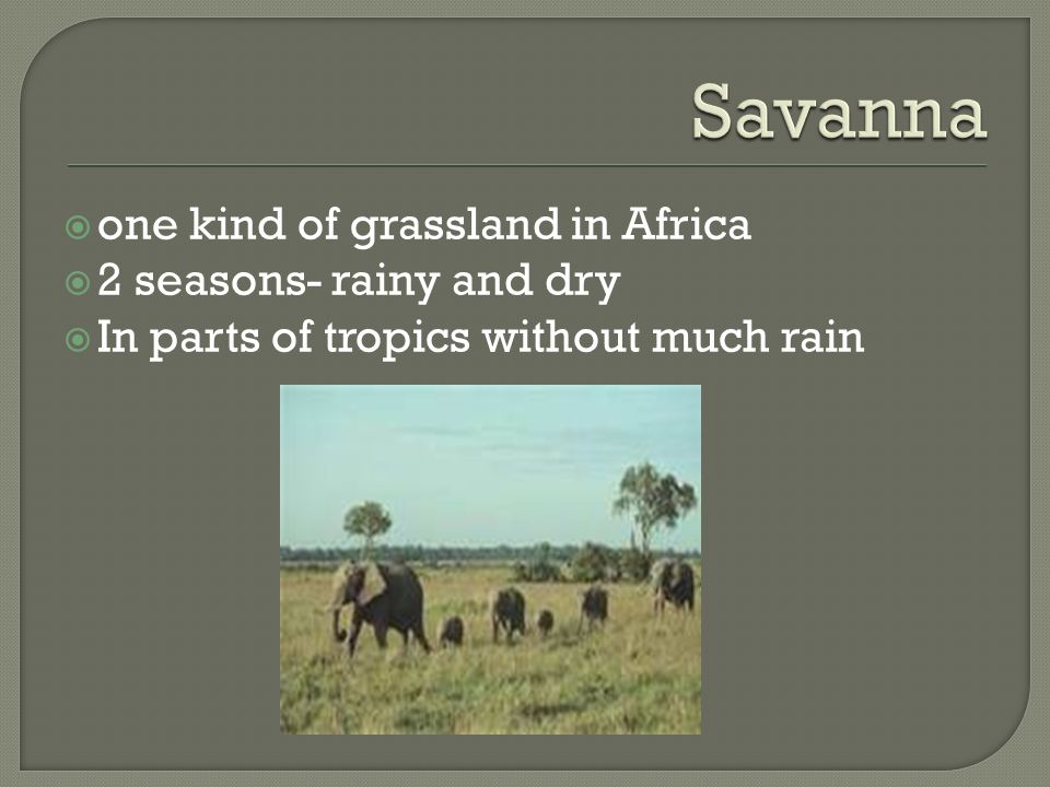Savanna one kind of grassland in Africa 2 seasons- rainy and dry