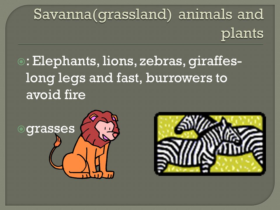 Savanna(grassland) animals and plants
