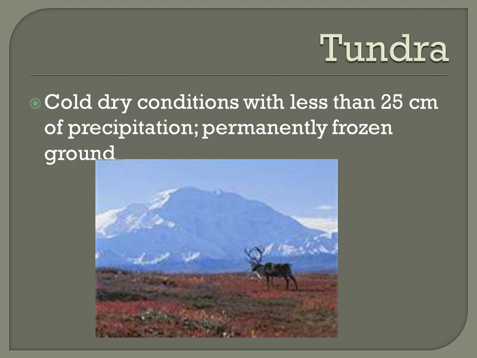 Tundra Cold dry conditions with less than 25 cm of precipitation; permanently frozen ground