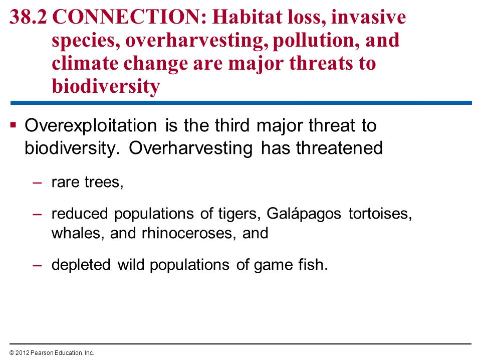 importance and threats of to biodiversity Importance of biodiversity 21 ethical and moral values  chemical or thermal pollution is a threat to biodiversity species in habitats are increasingly being.