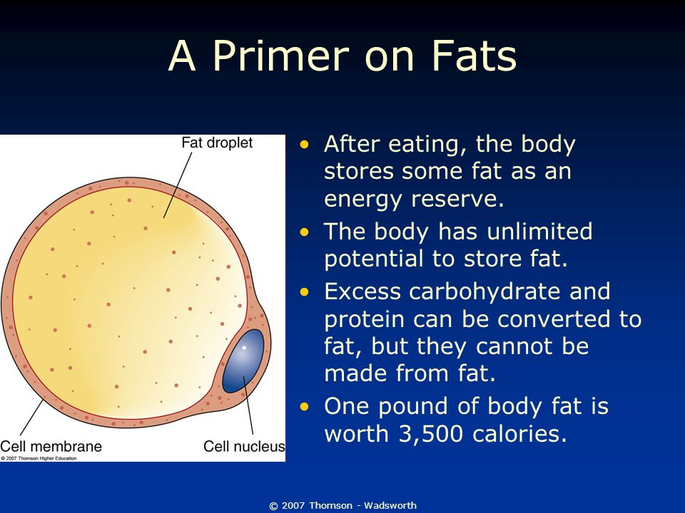 The Lipids Fats And Oils Ppt Video Online Download