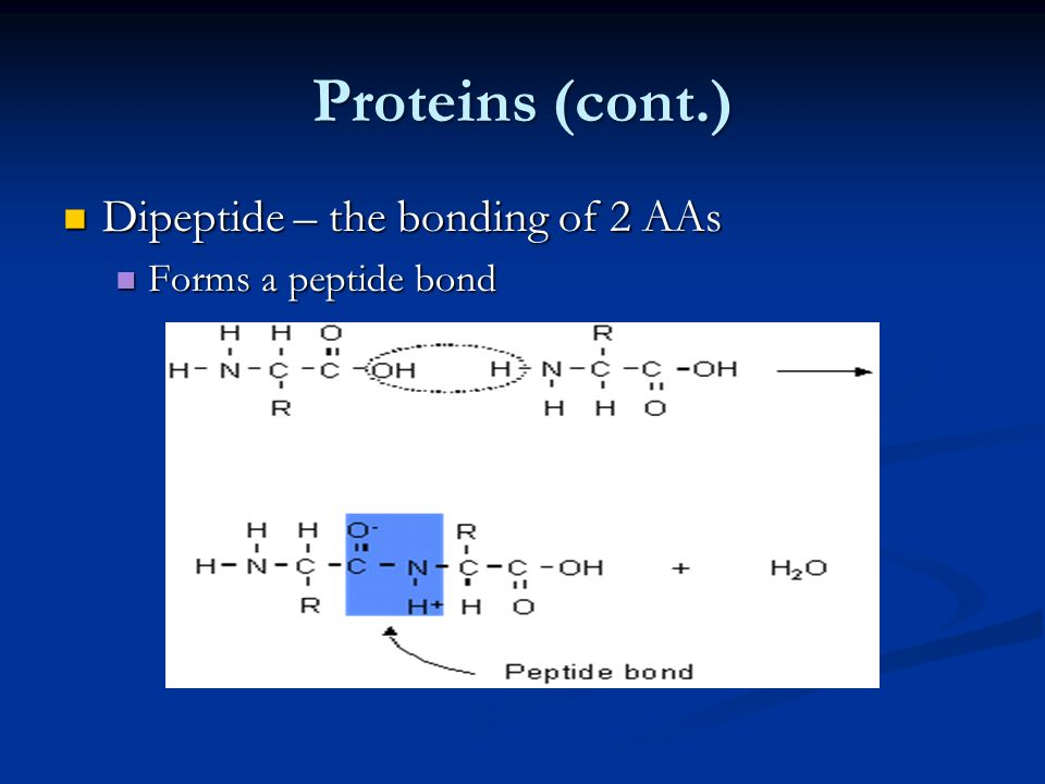 Proteins (cont.) Dipeptide – the bonding of 2 AAs Forms a peptide bond