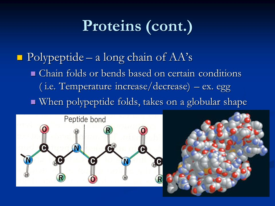 Proteins (cont.) Polypeptide – a long chain of AA's