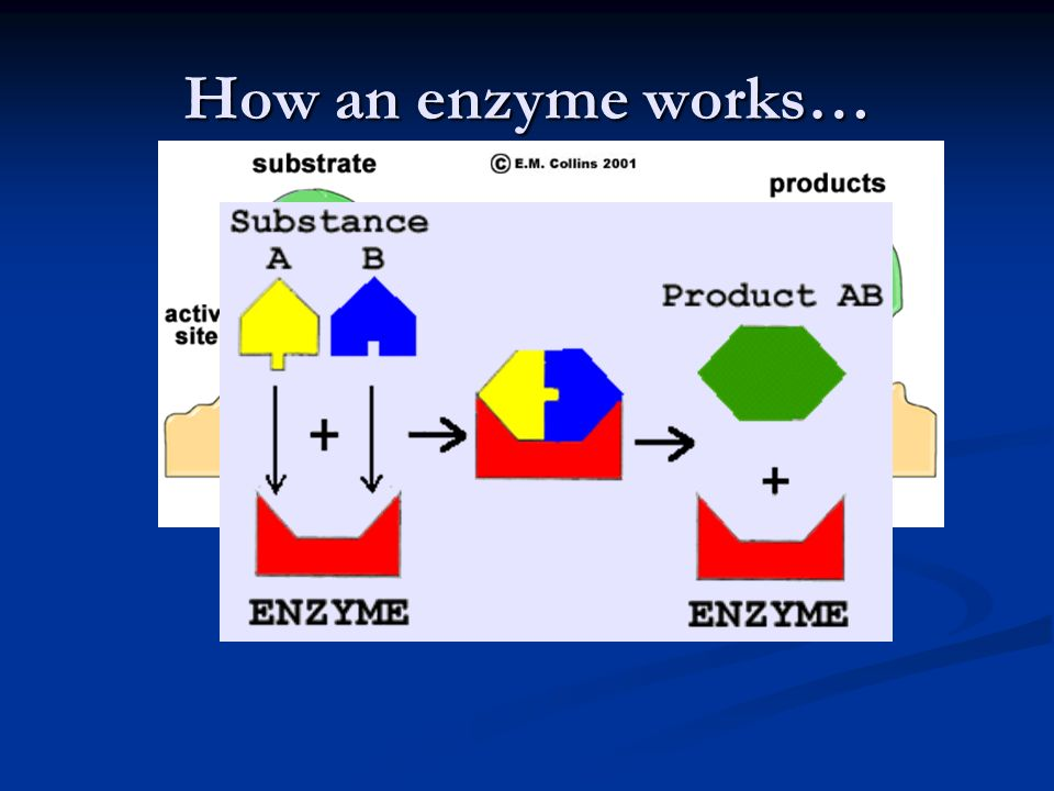 How an enzyme works…