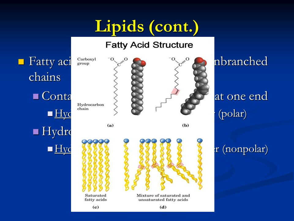 Lipids (cont.) Fatty acids – monomer of a lipid – unbranched chains