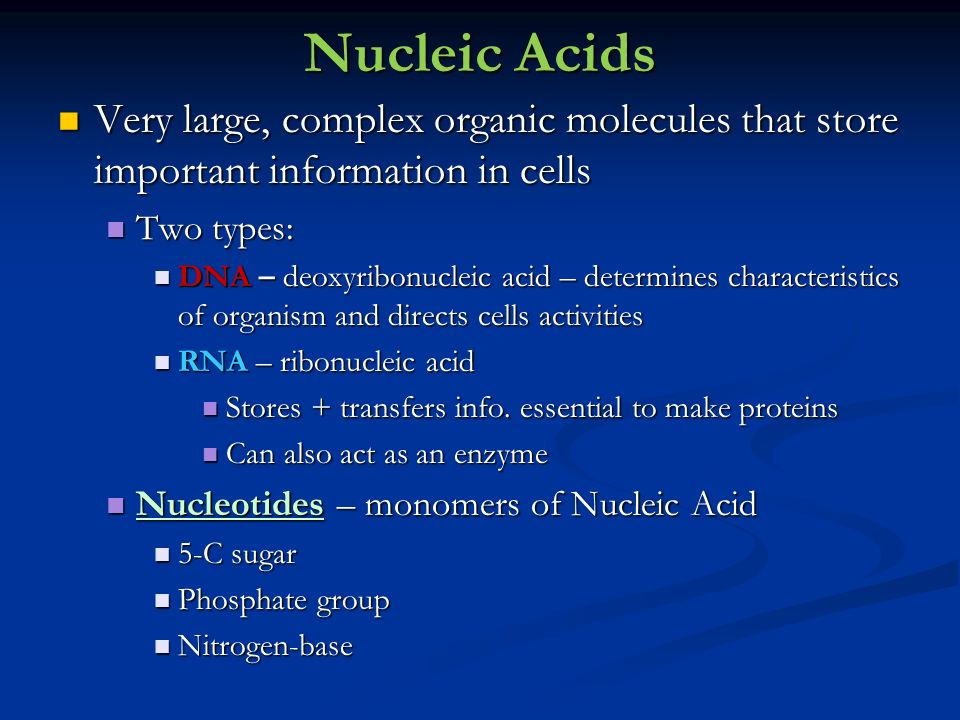 Nucleic Acids Very large, complex organic molecules that store important information in cells. Two types: