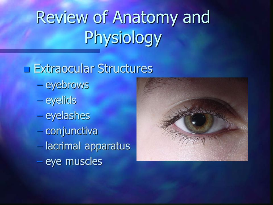 Charmant Anatomy And Physiology Of Eye Ppt Ideen - Anatomie Von ...
