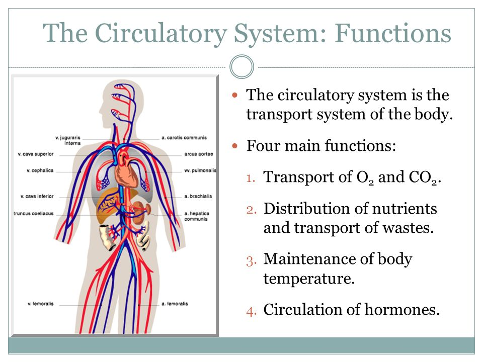 lesson 3: the circulatory system - ppt video online download, Human Body