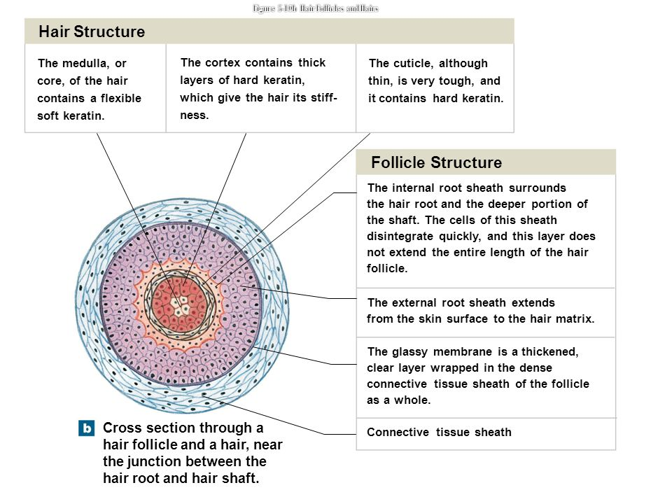An Introduction To The Integumentary System Ppt Video