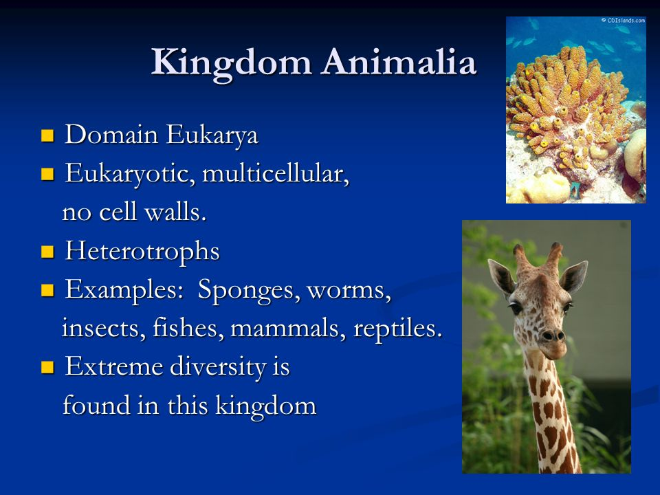Classification of Living Things - ppt video online download