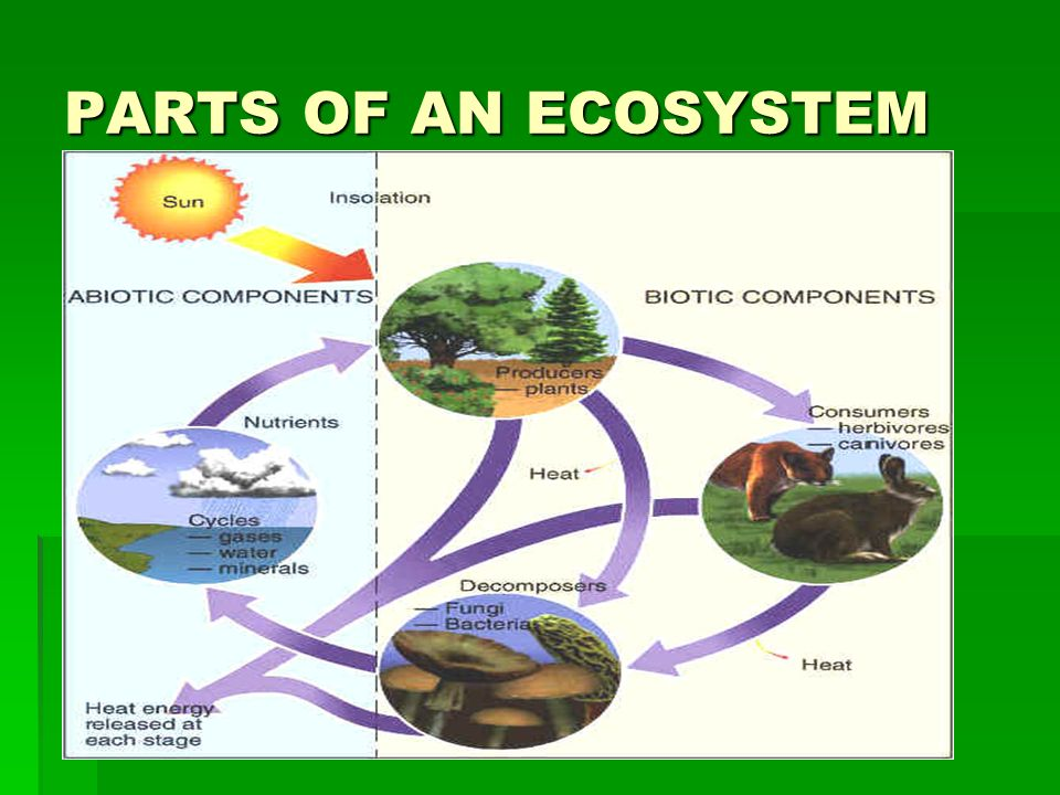 components of the ecosystem Ecosystem is defined as the earth's vital units encompassing the entire system of living organisms (biotic) and the physical factors (abiotic or non-living things.