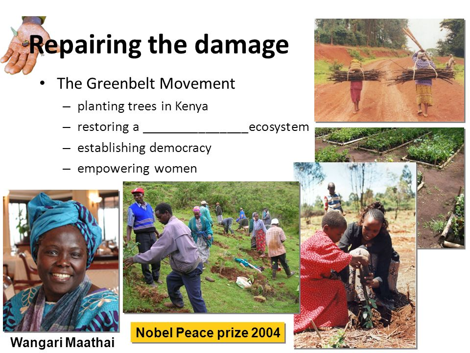 Repairing the damage The Greenbelt Movement planting trees in Kenya