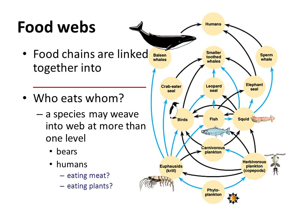 Food webs Food chains are linked together into __________________