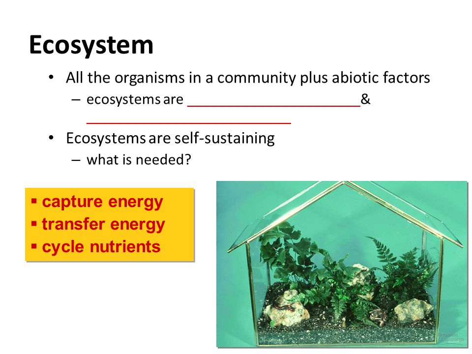 Ecosystem All the organisms in a community plus abiotic factors