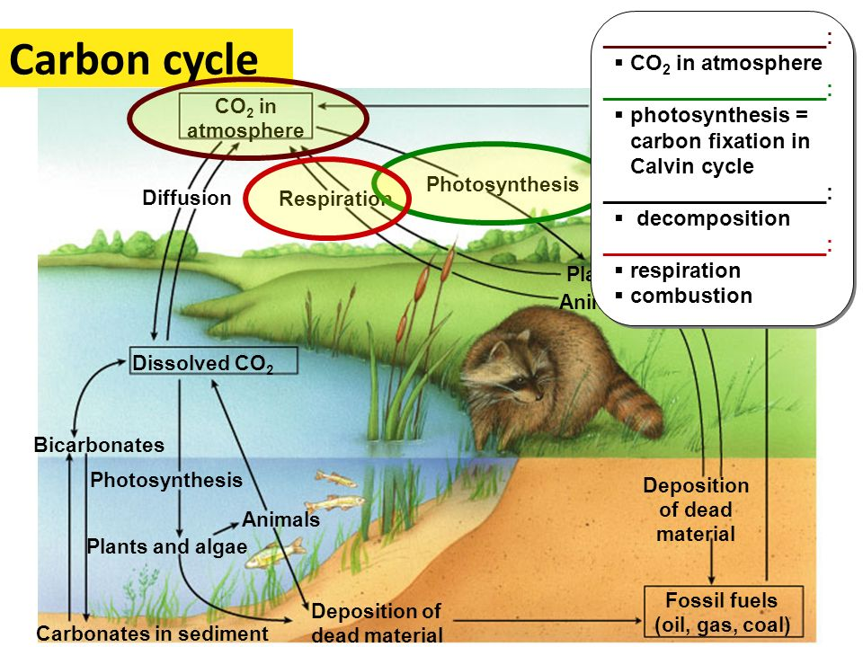 Carbon cycle ___________________: CO2 in atmosphere