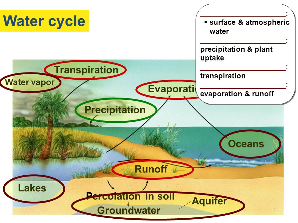 Water cycle Solar energy Transpiration Evaporation Precipitation