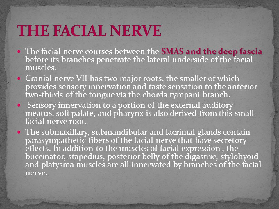Trunk of the facial nerve