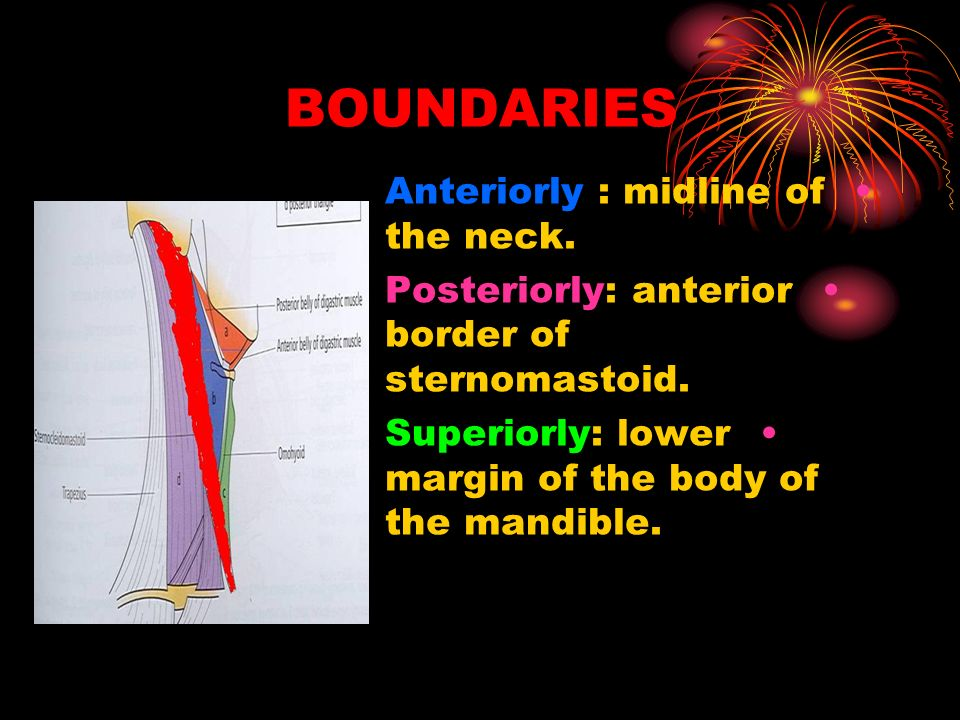 BOUNDARIES Anteriorly : midline of the neck.