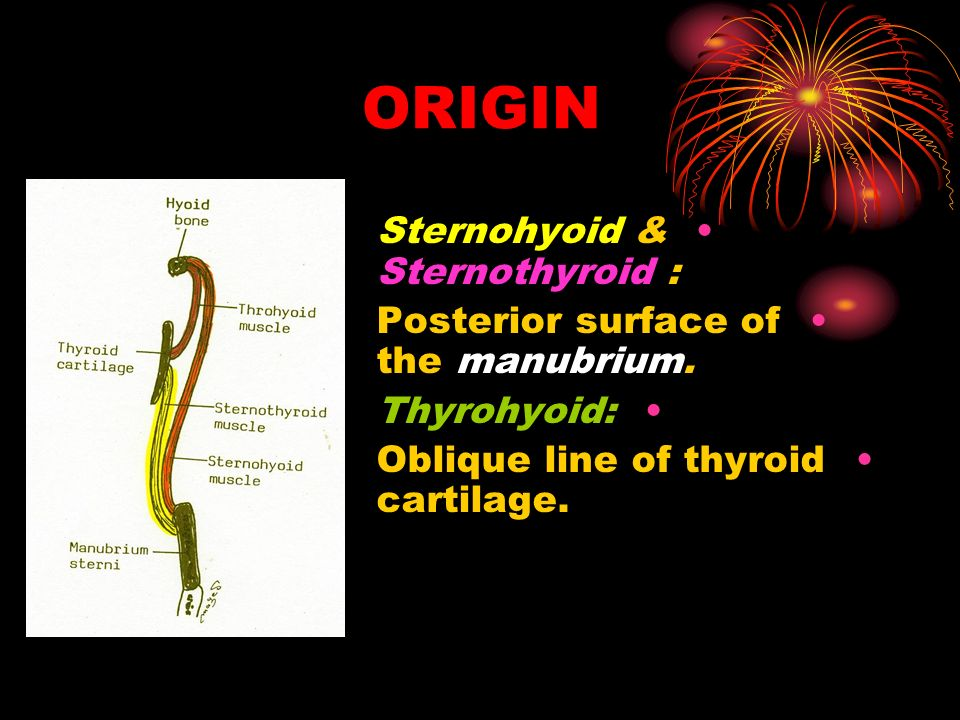 ORIGIN Sternohyoid & Sternothyroid :