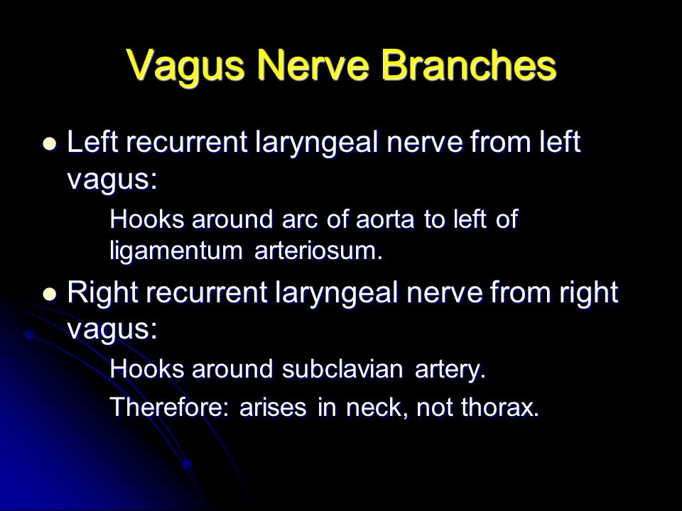 Vagus Nerve Branches Left recurrent laryngeal nerve from left vagus: