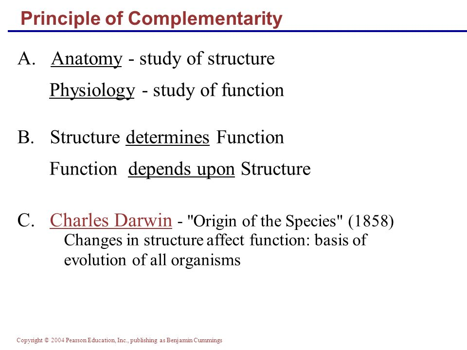 Atemberaubend Principle Of Complementarity Anatomy And Physiology ...