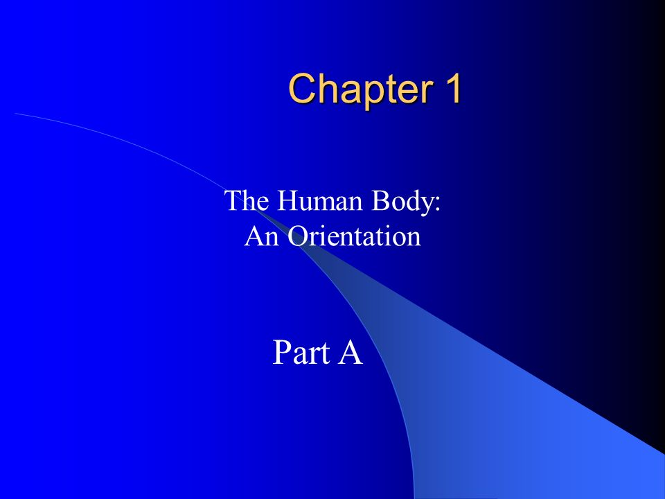 The Human Body: An Orientation - ppt download