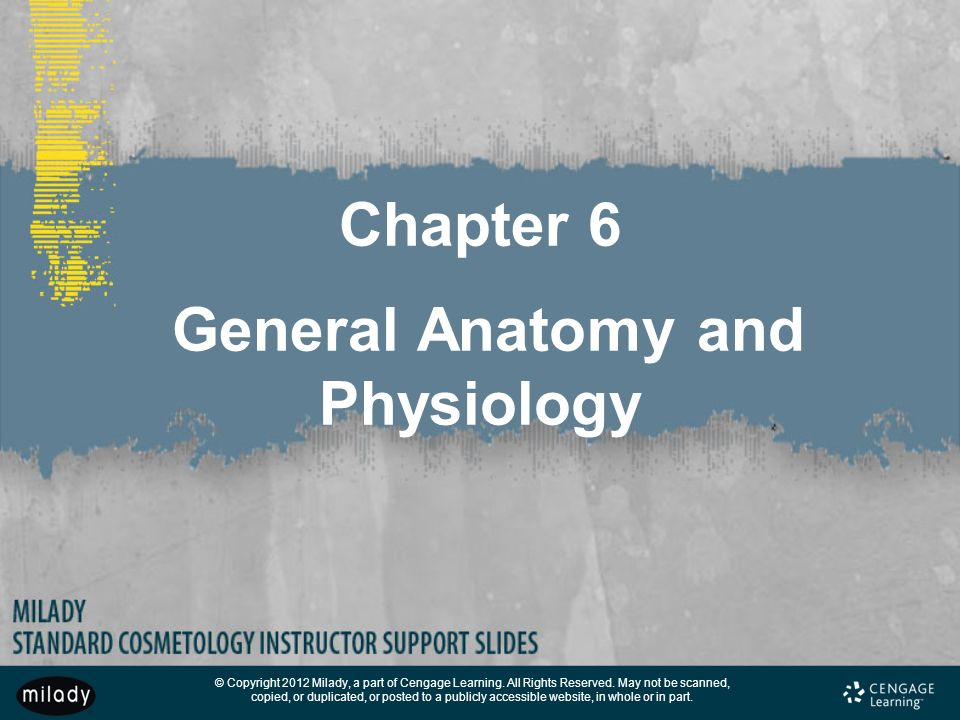 Chapter 6 General Anatomy and Physiology - ppt download