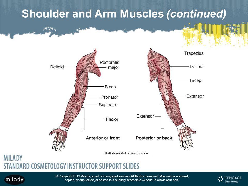 Anatomy - Lessons - Tes Teach