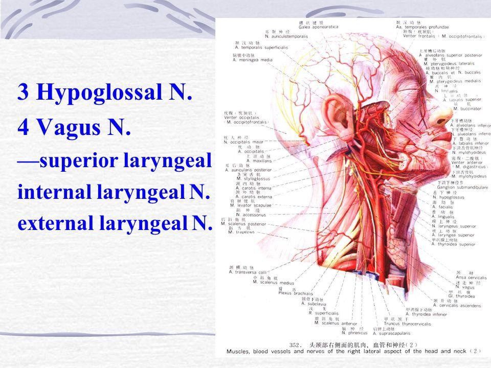 Nett Anatomie Arteria Carotis Bilder - Menschliche Anatomie Bilder ...