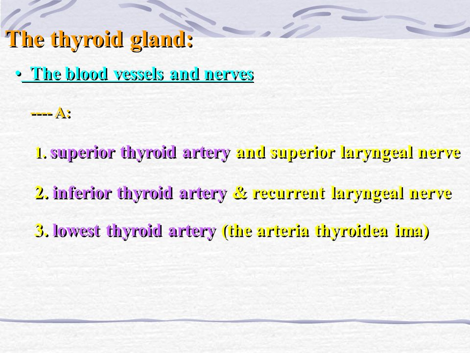 The thyroid gland: The blood vessels and nerves