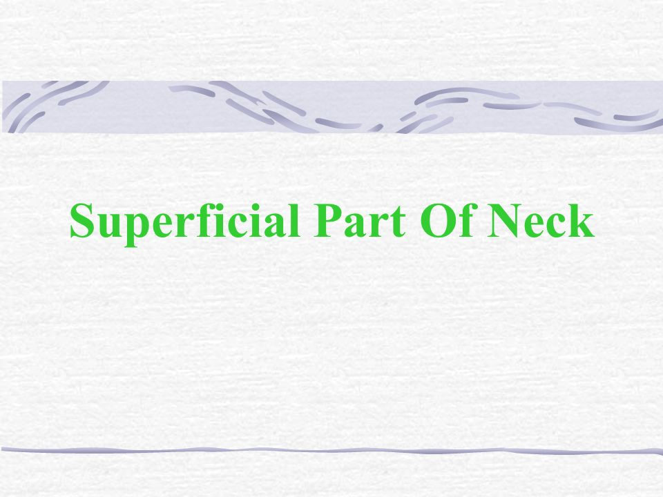 Superficial Part Of Neck