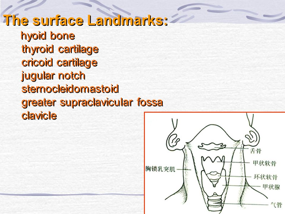 The surface Landmarks: