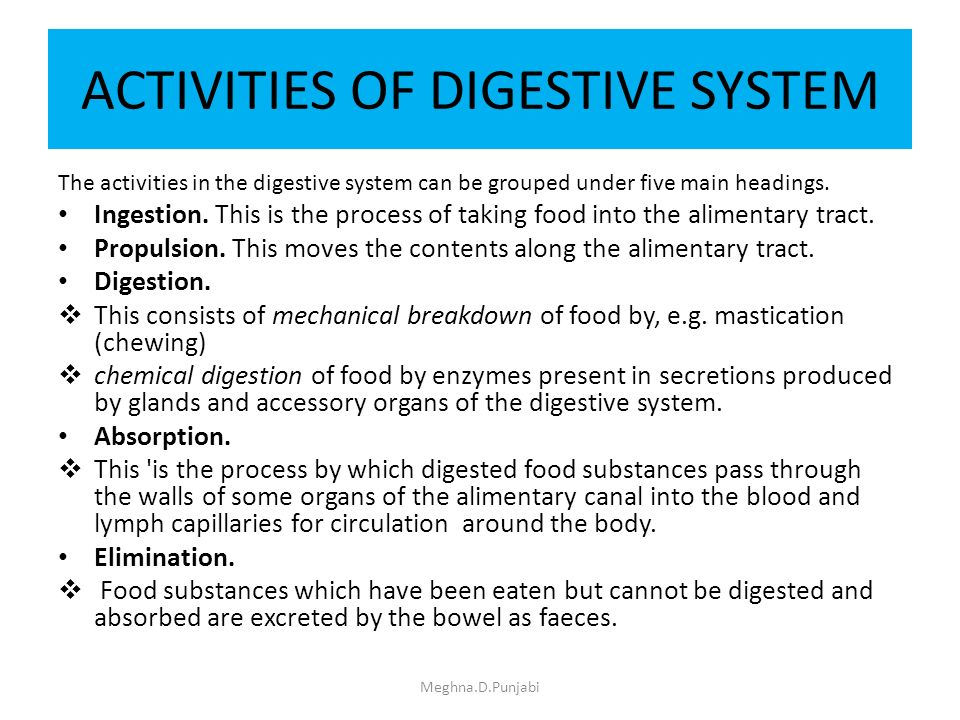 digestive system meghna.d.punjabi. - ppt download, Human Body