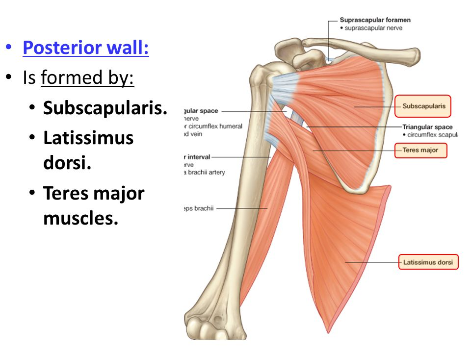 Posterior wall: Is formed by: Subscapularis. Latissimus dorsi. Teres major muscles.