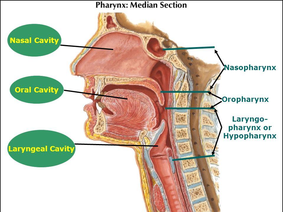 Oral Nasopharynx 52