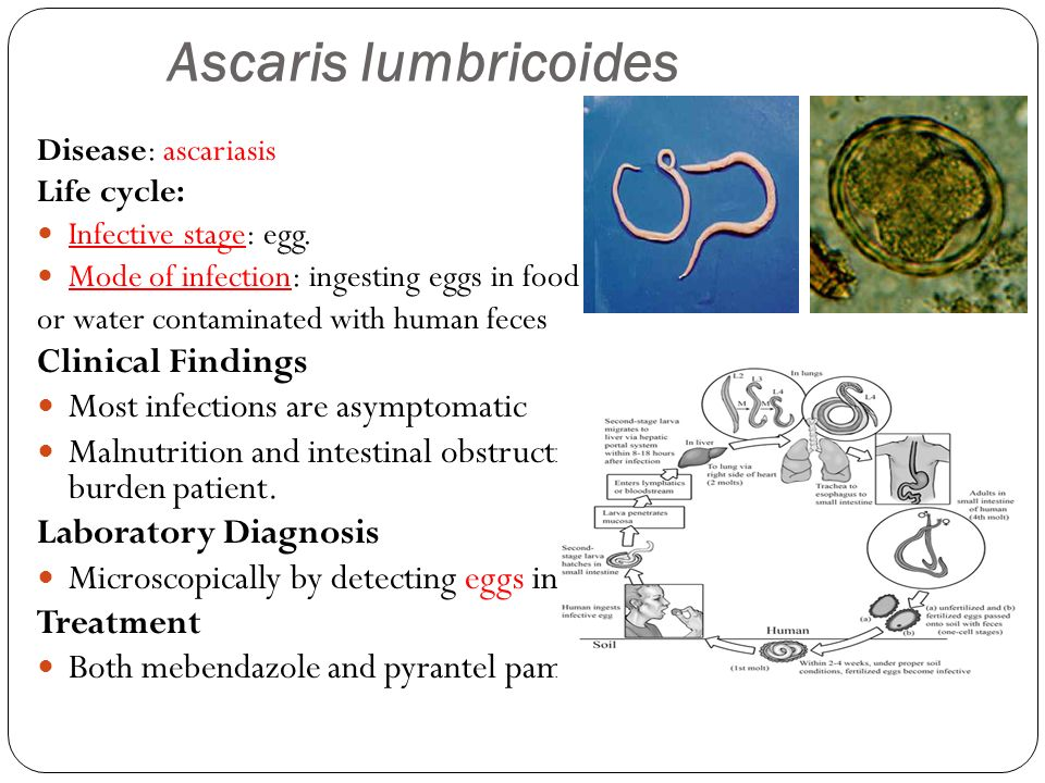 Medical Parasitology Ppt Video Online Download