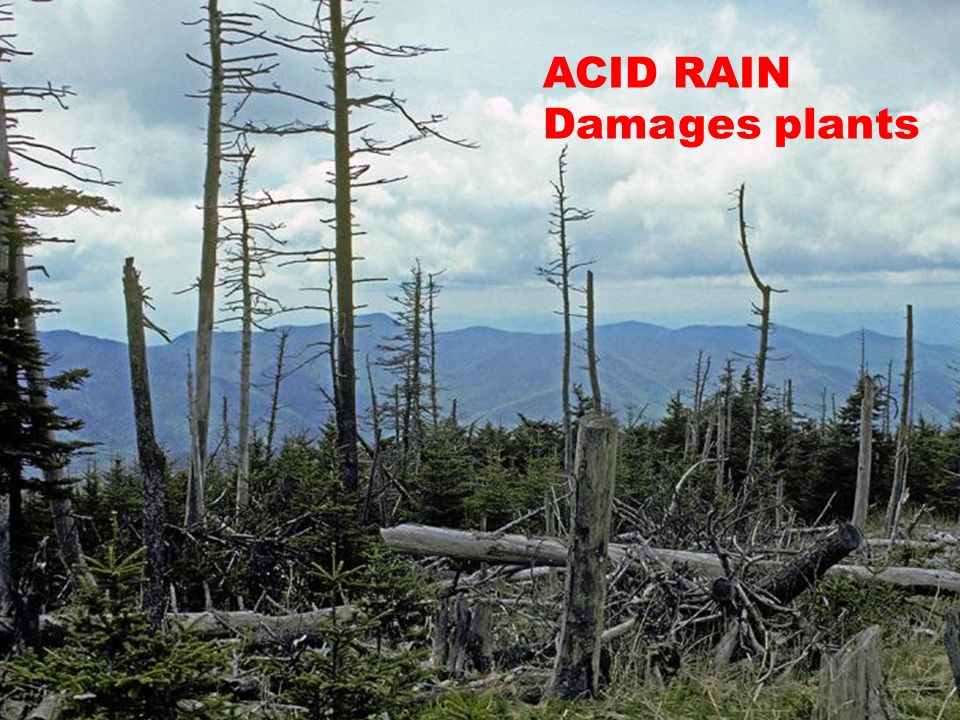 acid rain the southern company Free pdf ebooks (user's guide, manuals, sheets) about acid rain southern company case ready for download.