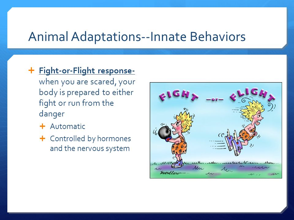 Are Innate Behaviors Controlled By Natural Selection