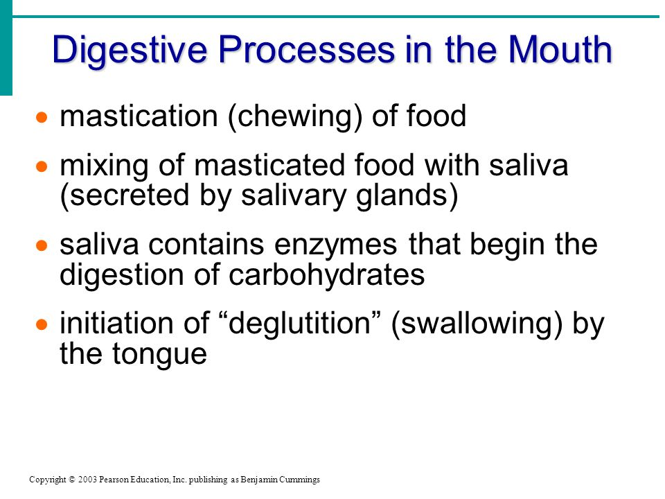 Digestive Processes in the Mouth