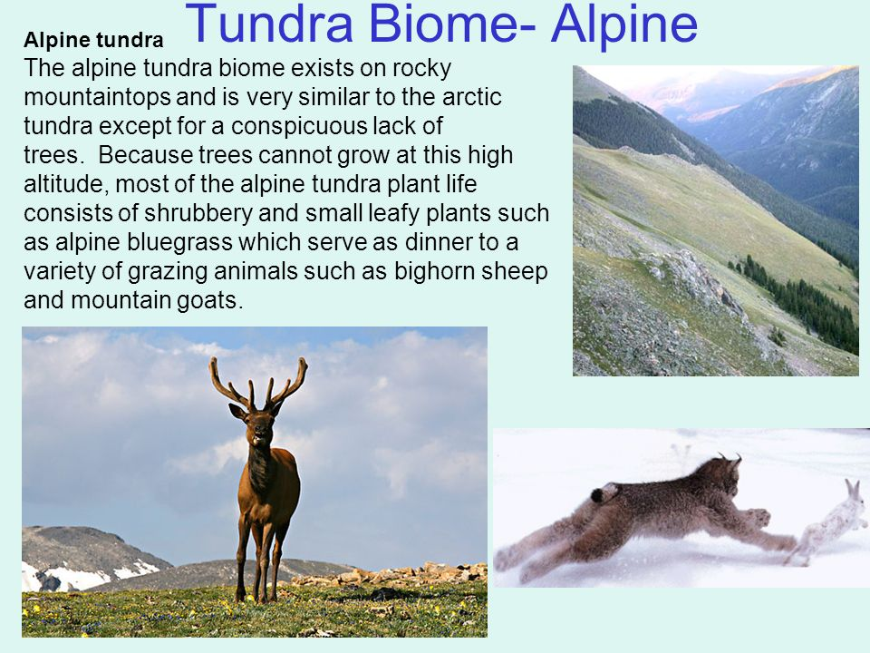 the tundra biome arctic and alpine The tundra biome arctic and alpine tundra environments, how we can produce substantial and sustainable food.