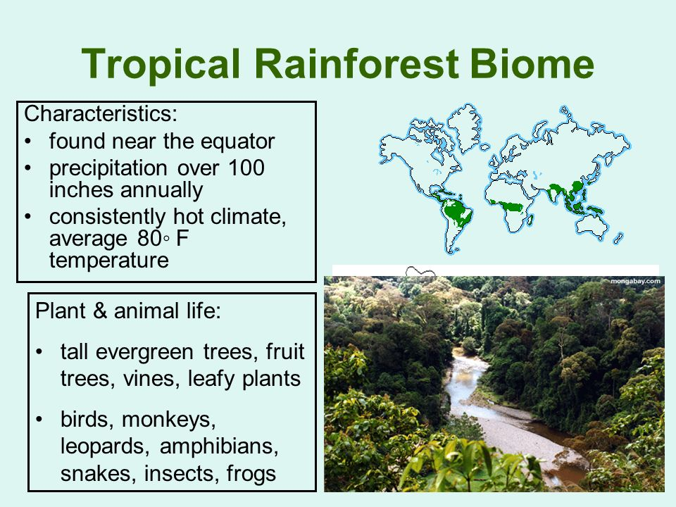characteristics of a tropical biome One major characteristic of a tropical ocean is the coral reef there are 3 main types of reefs: fringing reefs, which are close to shore and found in hawaii, the caribbean, and kenya barrier reefs are further from the shore, like the great barrie.