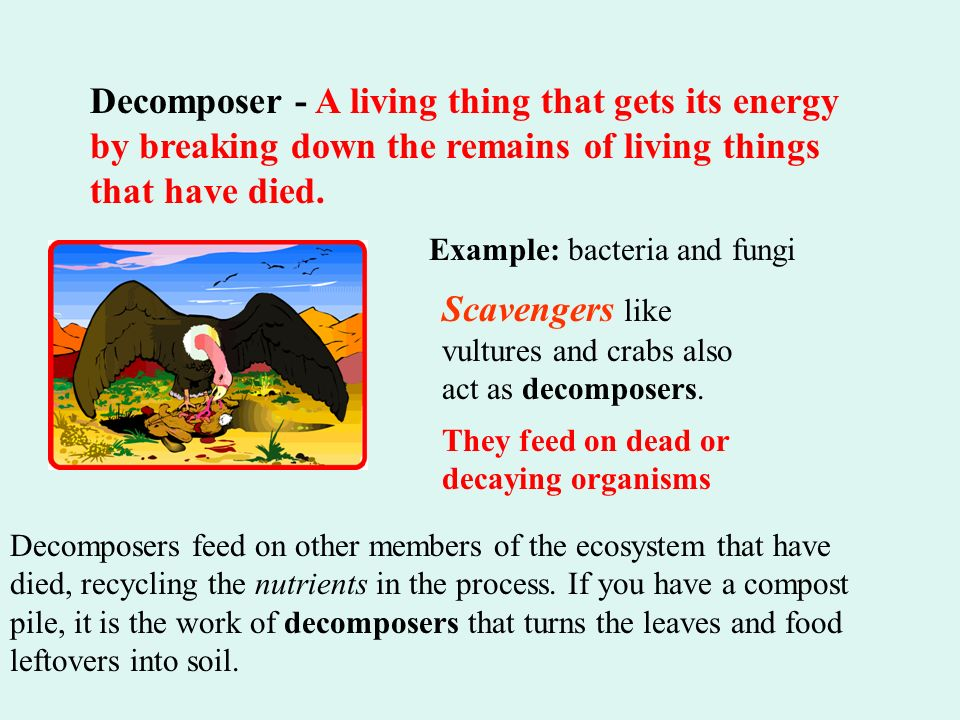 living things such as plants animals fungi and bacteria relationship