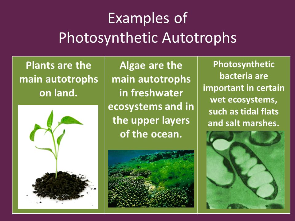 Chapter 3 The Biosphere Ppt Video Online Download