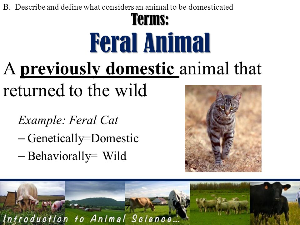 an introduction to the history of domestic cats Animals and society: an introduction to human-animal studies  the domestic  cat bird killer, mouser and destroyer of wild life means of.