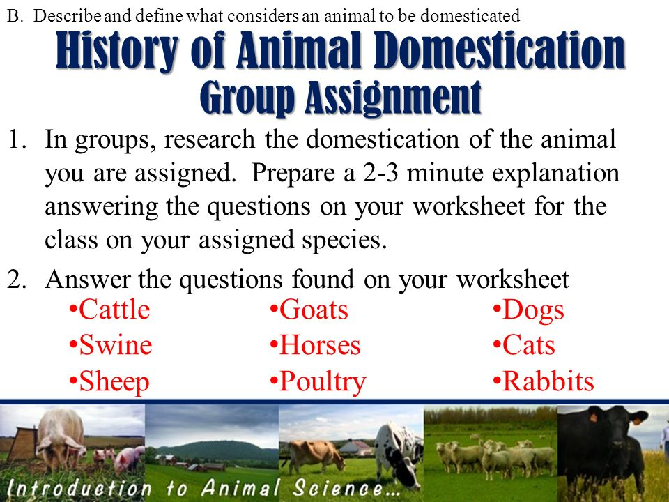 introduction to animal science ppt video online download. Black Bedroom Furniture Sets. Home Design Ideas